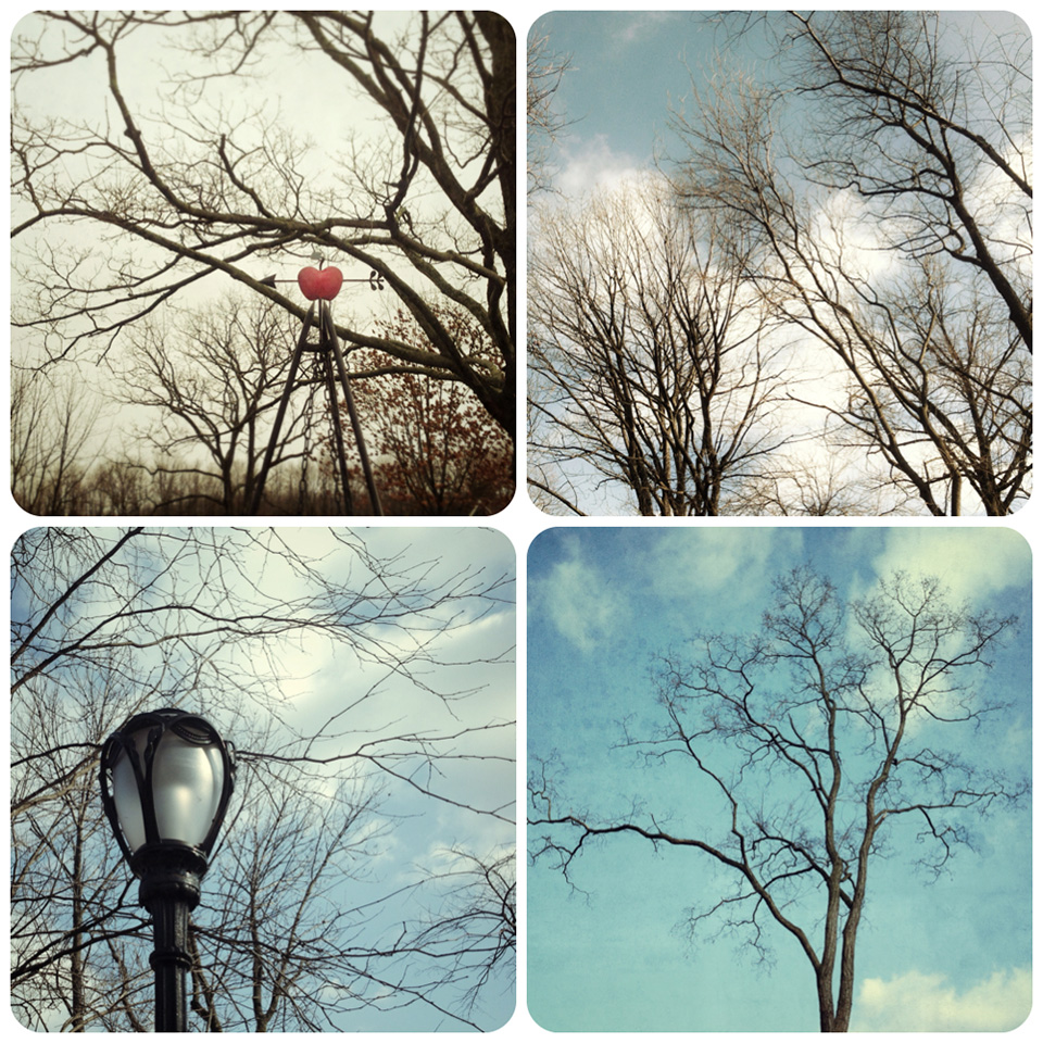 tree collage 3 Trees