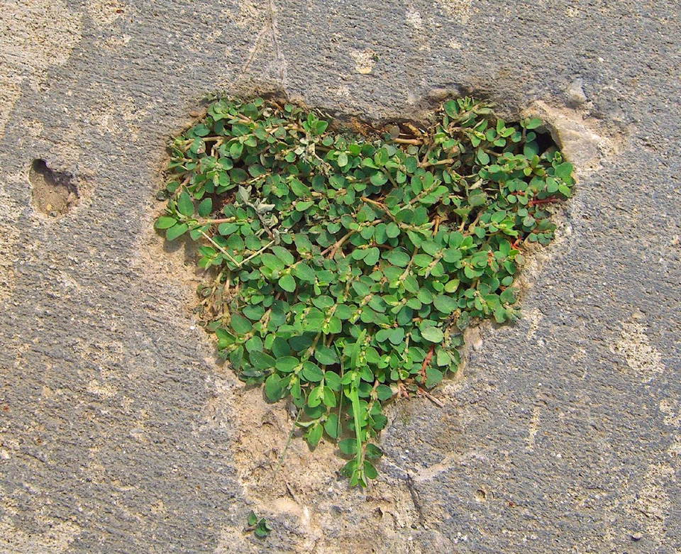 plant Hearts for Inspiration.