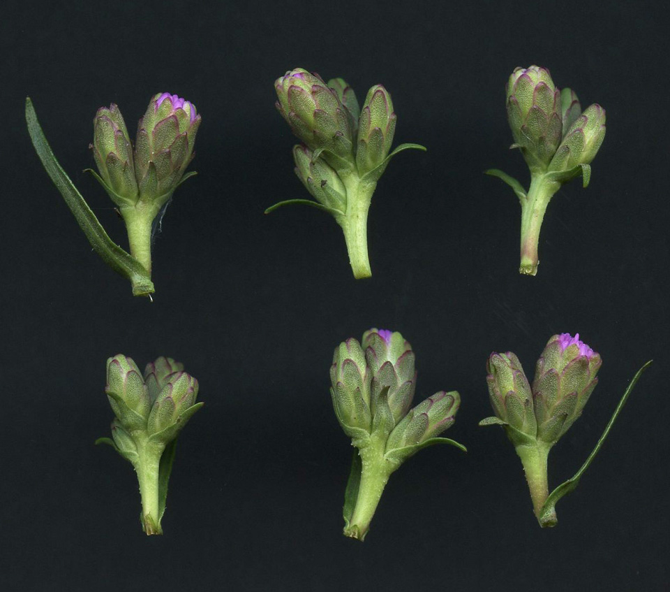 f11 copy Botanical Observations.