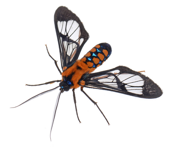 4 Beautiful Bugs Photographed by Geoff Gallice.
