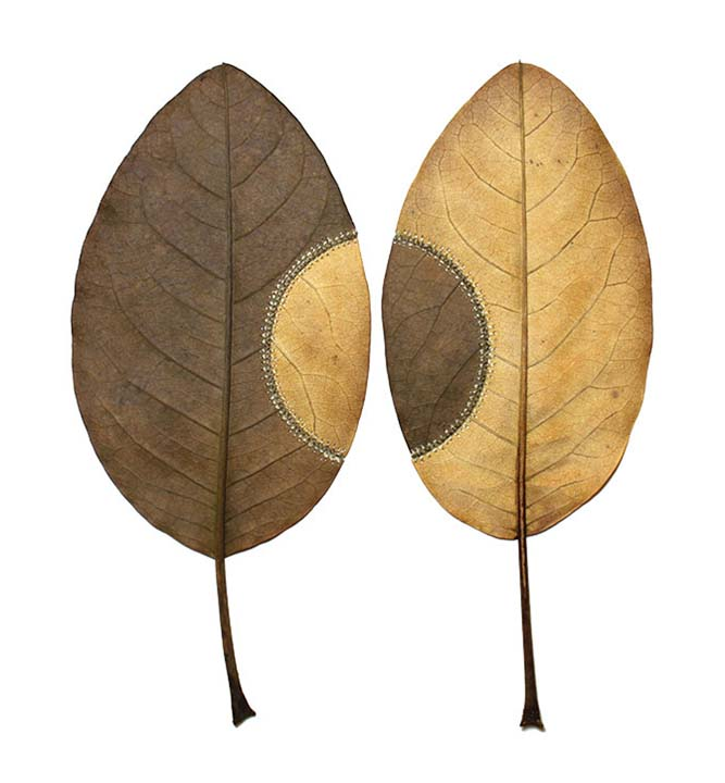 ONE LEAF The Art of Susanna Bauer.