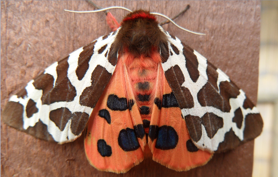 6157864781 454ae17057 b Beautiful Moths Photographed by Andrew Cooper.