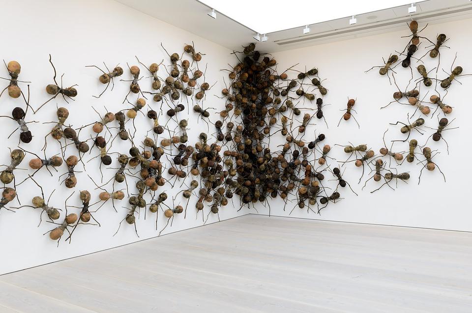 Ant Installation by Rafael Gomezbarro.