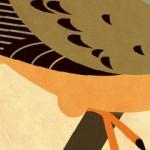 Birds Illustrations by Scott Partridge.
